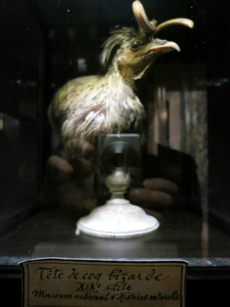Musee-de-la-chasse-et-de-la nature-rooster-with-horns