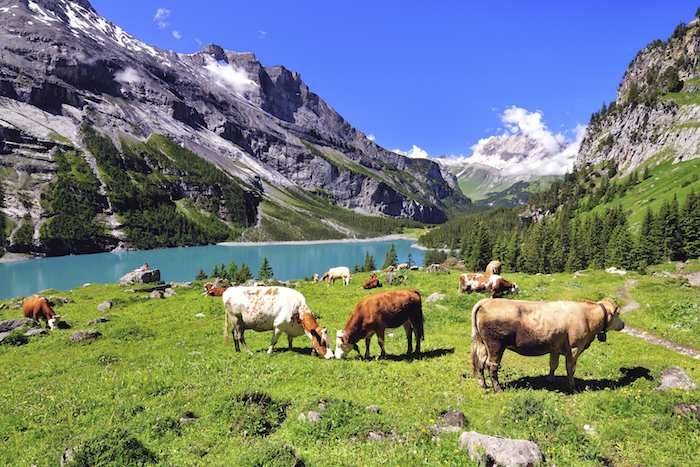 Inntravel Swiss
