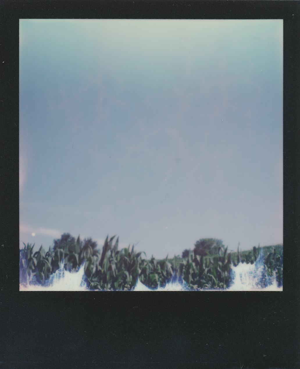 polaroids (4)