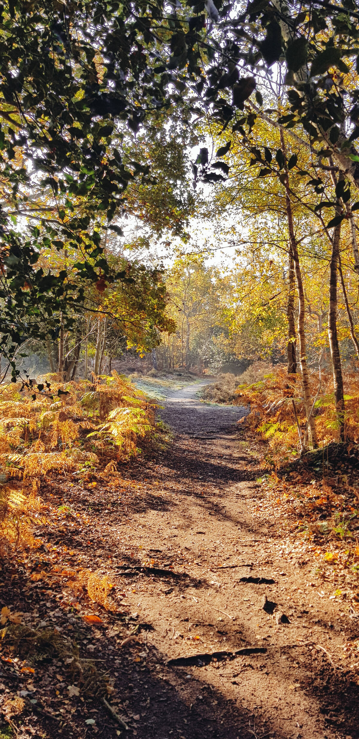 Pett's Wood Walks South East London Kent