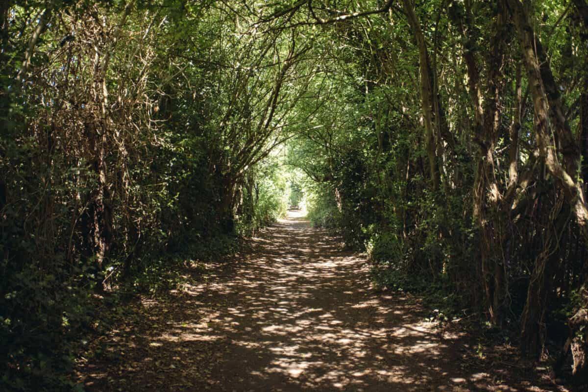 Green Chain Walk Mottingham Woods
