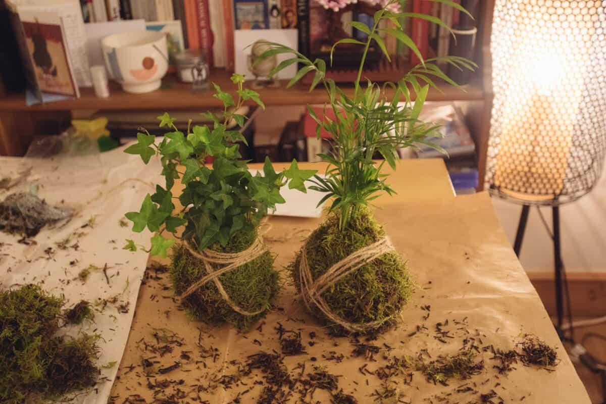 kokedama jar & fern workshop
